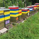 Bienen und Honigproduktion Koch 3